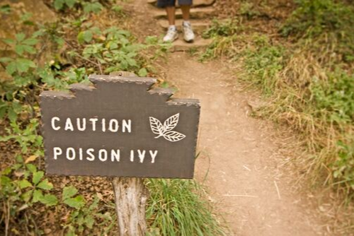 Poisonous plants becoming stronger in recent years