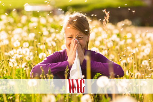 Allergies or Cold?