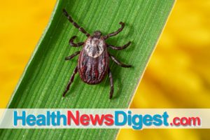 Bug Off: How to Remove a Tick – and Keep It Away in the First Place
